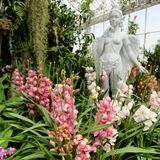Il giardino dell'orchidea alla La del gioco ploen in Buriram Tailandia Fotografia Stock Libera da Diritti