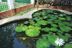 Il giardino di Baldha è uno di più vecchi giardini botanici nel Bangladesh Il giardino è arricchito con le specie rare della pian fotografie stock libere da diritti