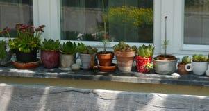 Il giardino di ora legale fiorisce la vita domestica delle piante della decorazione Fotografia Stock