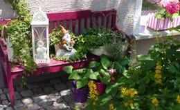 Il giardino di ora legale fiorisce la vita domestica delle piante della decorazione Immagine Stock Libera da Diritti