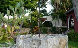 Il giardino di ora legale fiorisce la vita domestica delle piante della decorazione Immagini Stock Libere da Diritti