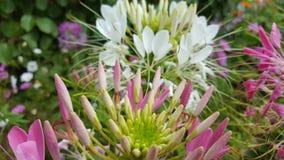 Il giardino di Sussex fiorisce 2 Immagini Stock Libere da Diritti