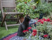 Il giardino - refrigerazione del gatto nero Immagini Stock