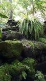 Il giardino tropicale fotografia stock libera da diritti