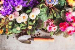 Il giardino variopinto fiorisce con la pala di giardinaggio, confine floreale immagine stock