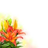 Il giglio fiorisce il mazzo su fondo bianco Immagini Stock