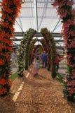 Il giglio variopinto fiorisce sbocciare nelle serre di Keukenhof, N immagini stock