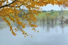 Il ginkgo giallo luminoso di autunno va, fondo nebbioso fotografia stock