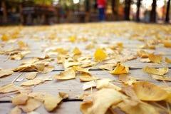 Il ginkgo lascia il tappeto Fotografia Stock Libera da Diritti