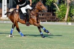 Il giocatore di polo del cavallo ha colpito una palla di polo Immagini Stock Libere da Diritti