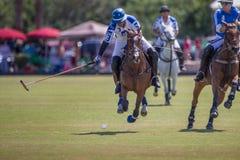 Il giocatore di polo oscilla alla palla Fotografie Stock