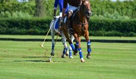 Il giocatore di polo per colpire la palla di polo Fotografie Stock Libere da Diritti