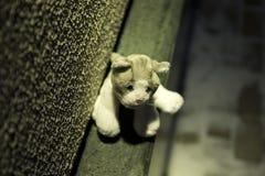 Il giocattolo mancante del gatto Immagine Stock