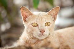 Il gioco nascosto gatto Fotografia Stock Libera da Diritti