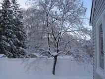 Il giorno dell'inverno bianco freddo fotografia stock libera da diritti