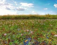 il giorno di fioritura sistema l'estate rurale di sally del fiore del fireweed Fotografia Stock