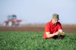Il giovane agricoltore che examing ha coltivare i giacimenti di grano fotografia stock libera da diritti