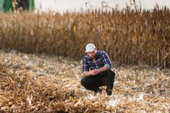 Il giovane agricoltore esamina il cereale nel campo di grano durante il raccolto Immagine Stock