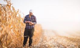 Il giovane agricoltore esamina il seme dei semi Fotografie Stock