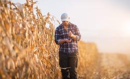 Il giovane agricoltore esamina il seme del cereale nei campi di grano Fotografia Stock