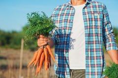 Il giovane agricoltore Man che resta e che tiene il mazzo ha raccolto la carota fresca in giardino Bio- verdure organiche natural Immagini Stock