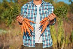 Il giovane agricoltore Man che resta e che tiene il mazzo ha raccolto la carota fresca in giardino Bio- verdure organiche natural Fotografia Stock Libera da Diritti