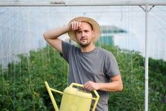 Il giovane agricoltore stanco che cancella il suo ha sudato dopo il lavoro in una serra Fotografia Stock