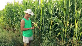 Il giovane agronomo controlla il grano del cereale per vedere se c'è qualità archivi video
