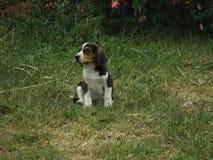 Il giovane cucciolo gioca fuori il lato Fotografie Stock Libere da Diritti