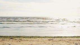 Il giovane fa la vibrazione acrobatica sulla spiaggia in macchina fotografica anteriore Onde Sea Albero nel campo archivi video