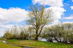 Il giovane fresco va ai rami degli alberi germoglianti Fotografia Stock Libera da Diritti