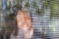 Il giovane fronte sorridente vago dietro Dusty Fluted, vetro costolato o il chiaro policarbonato ha ondulato lo strato Online ano fotografie stock libere da diritti