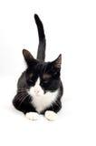 Il giovane gatto è crols con il racconto in su fotografie stock