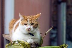 Il giovane gatto dalla testa bianco sta sedendosi sull'inferriata Fotografia Stock Libera da Diritti