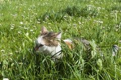 Il giovane gatto si nasconde fra alta erba verde fresca Fotografie Stock