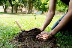 Il giovane ha usato Siem per scavare il suolo per piantare gli alberi nel suo cortile durante il giorno fotografie stock libere da diritti