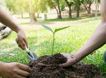 Il giovane ha usato Siem per scavare il suolo per piantare gli alberi nel suo cortile durante il giorno fotografia stock libera da diritti
