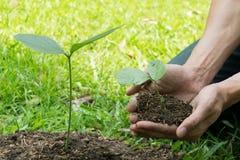 Il giovane ha usato Siem per scavare il suolo per piantare gli alberi nel suo cortile durante il giorno immagine stock libera da diritti
