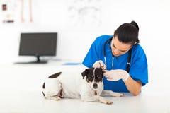 Cane d'esame del veterinario Fotografia Stock