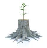 Il giovane semenzale dell'albero si sviluppa dal vecchio ceppo Fotografia Stock