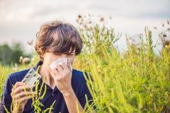 Il giovane starnutisce a causa di un'allergia all'ambrosia Immagine Stock Libera da Diritti