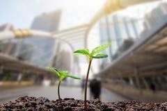 Il giovane verde germoglia con goccia di acqua che cresce dal suolo sulla città vaga con il fondo molle di luce solare immagine stock libera da diritti