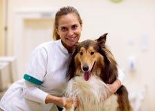 Il giovane veterinario sorridente con soddisfa il ambula paziente dell'animale domestico della formica immagine stock