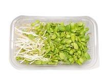 Il girasole germoglia l'insalata Fotografie Stock
