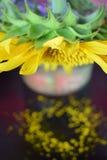 Il girasole in un barattolo perde il suo polline Immagine Stock