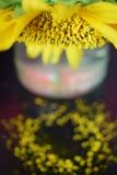 Il girasole in un barattolo perde il suo polline Fotografia Stock Libera da Diritti