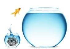 Il Goldfish che salta in grande ciotola Immagini Stock Libere da Diritti