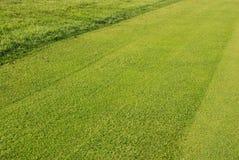 Il golf gren - l'erba Immagini Stock Libere da Diritti