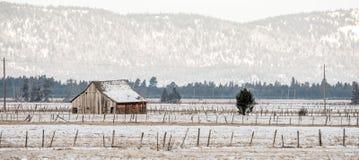 Il granaio degli agricoltori dentro appassisce con i recinti del barbwire Fotografia Stock
