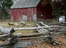 Il granaio e le pecore rossi a vecchio ripristino del villaggio di Bethpage in vecchio sono Immagine Stock